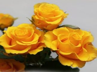 роза флорибунда Сфинкс
